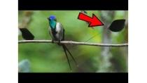 Top 10 RAREST Birds on Earth!!