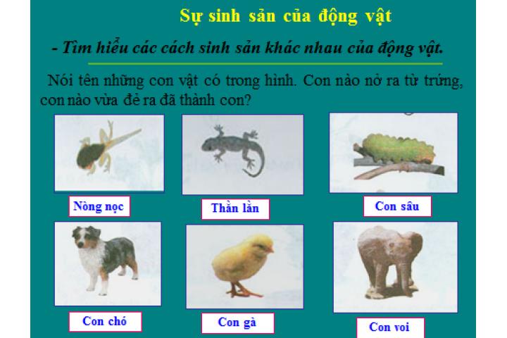 Lớp 5-Khoa học-Bài 55-Sự sinh sản của động vật