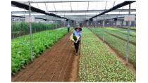 Ứng dụng khoa học công nghệ góp phần nâng cao hiệu quả sản xuất nông ...