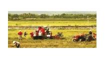 Khoa học công nghệ trong nông nghiệp: cần sự chuyển biến mạnh mẽ