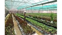 Ứng dụng khoa học công nghệ trong nông nghiệp: Nền tảng để thực hiện ...