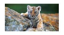 Giải bài tập SGK Khoa học 5 bài 55: Sự sinh sản của động vật - Giải ...