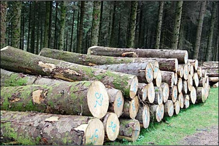 Sản phẩm - Eurowood - Nhà cung cấp gỗ nguyên liệu đáng tin cậy - gỗ ...
