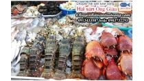 Cung Cấp Hải Sản Tươi Sống Tại Lào Cai đảm Bảo Chất Lượng