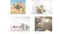 Kể tên một số cây hoặc con vật có thể sống ở xứ lạnh hoặc xứ nóng mà ...