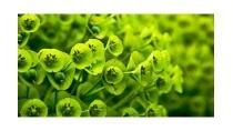 Giải bài tập SGK Khoa học 4 bài 58: Nhu cầu nước của thực vật - Giải ...