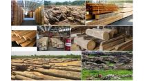 Ghana: Giá trị ngành gỗ không chính thức lớn so với xuất khẩu