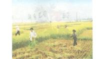 Vào giai đoạn nào cây lúa cần nhiều nước? Bài 58: Nhu cầu nước của ...