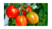Giải bài tập SGK Khoa học 4 bài 59: Nhu cầu chất khoáng của thực vật ...