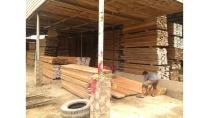 Chuyên cung cấp gỗ dái ngựa Gỗ tròn và gỗ qua xe sấy