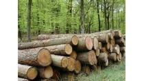 Lượng gỗ nhập từ Campuchia tăng hơn 50% trong năm 2015