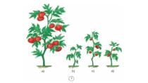 Khoa học 4 Bài 59: Nhu cầu chất khoáng của thực vật | Giải bài tập ...