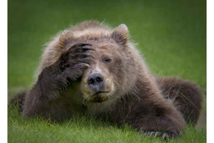 Cười xả tress hiệu quả khi bạn biết động vật cũng có lúc đáng yêu ...