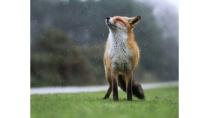 Thư giãn với những khoảnh khắc hài hước của động vật hoang dã | VTV.VN