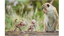 Những điều bất ngờ và thú vị về tâm lý động vật | Khoa học | Báo ...